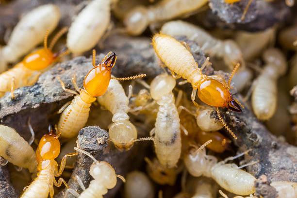 บริการกำจัดปลวกและแมลง บริการพ่นฆ่าเชื้อ